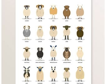 Sheep Poster, Farm Animals, Sheep Breeds, Farm Illustration, British Livestock