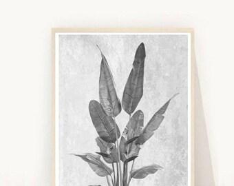 Plant Print, Printable Art,  Plant Photo, Botanical Print, Black and white,  Minimalist, Textured, Wall Decor, digital Download