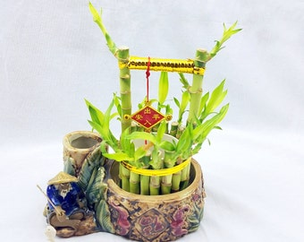 Well Shaped Straight Bamboo Plant In Fisherman Chinese Vase