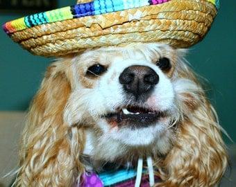 4 x 6 Feliz Cumplianos Birthday Card - Custom Dog Lover Birthday Card - Dog Rescue Birthday Card - Item 4002