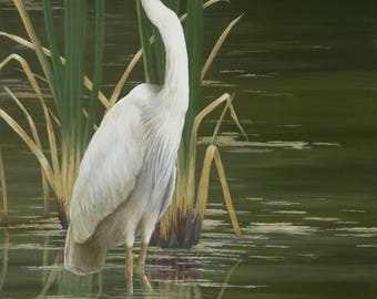 STANDING TALL  Great White Heron, canvas giclee, gallery wrapped, white egret, egret art, birds, bird art, herons, heron prints