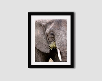 Elephant photography print // Africa photography // Elephant print // Elephant art // Travel photography // Wall art // Wall decor
