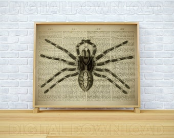 Print vintage, Wall art, Spider decor, Insect pictures, Dictionary art print, Insect download, Printable spider, Gift print, Room decor, JPG