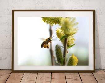 Spring, bee on the flight, Photo, Photoprint, Art, Printart - Poster, Acrylic, PVC foamboard, canvas print
