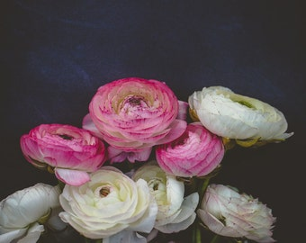 Fine Art Photo, Ranunculus Print, Flower Photograph, Pink, White, Garden Art, Flower Art, Home Decor, Botanical Print, Floral, Still Life