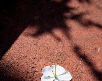 Fallen White Flower Photo - Garden Art Photograph - Nature Small Wall Art - White Bloom on Ochre Reddish Stone - Tiny Fallen Blossom Photo
