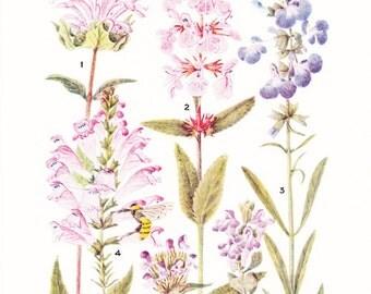 1930s Flower Print - Mint - Vintage Home Decor Botany Art Illustration for Nature Science Woman Great for Framing