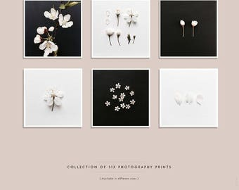 Blossom Print Set, White Blossom on black & white background, Floral wall art, Botanical Prints, Set of 6, Square Art Print, Gallery Wall