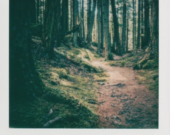 Instant Photo Forest Walk in the Trees- Decorate with a vintage feel - Free Domestic Shipping