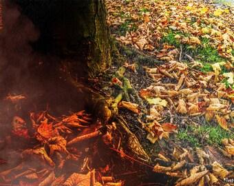Horror Print - Tree Silhouette, Woods, Roots, Trees, A3, Horror Scene,Dark Print, Digital Art,Horror Art,Dark Art, Burning, Leaves