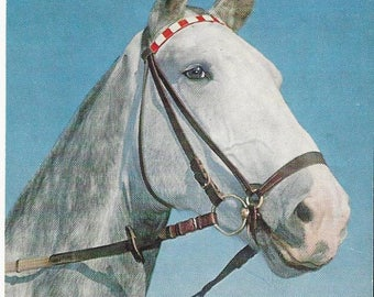 Vintage Alfred Mainzer #898 Horse Lithograph Postcard, 1943-1964