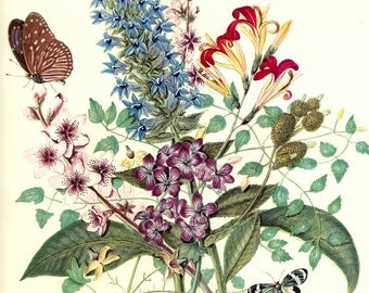 Summer Flowers & Butterflies, Floral Bouquet, Butterfly, 1948 Home Wall Decor, Vintage 10x14 Color Print, FREE SHIPPING
