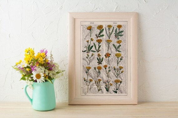 Summer Sale Dandelion collection Print on Vintage Dictionary Book page, Wild flora art, Wall art naturalist illustration  BFL214