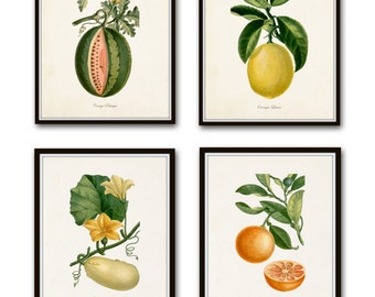 French Botanical Print Set No. 12, Giclee, Prints, Kitchen Art, Antique Botanicals, Fruit Prints, Wall Art, Lemon, Orange, Citrus Prints