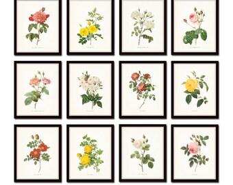 Redoute Roses Print Set No.22, Botanical Prints, Giclee, Wall Art, Print, Flower Prints, Rose Prints, Print, Illustration, Redoute Roses