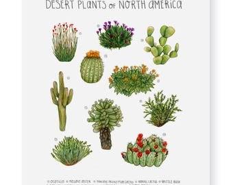Desert Plants of North America Fine Art Giclee Print
