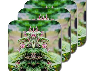 Cannabis Coasters: Four Pack Marijuana Coasters in Purple Wonder Marijuana Print, Coasters, Table Coasters, Ganja Coasters- MADE TO ORDER
