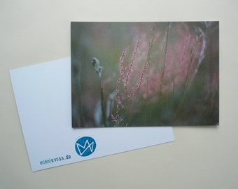 Sorrel, eight postcards, postcards, set, minnievoss, analog photography, offset printing, postcard, postcard, sorrel