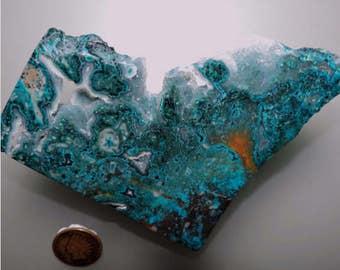 Chrysocolla with Fossil Crinoid, Druzy Quartz, Chrysocolla, Fossil Crinoid, Mineral Specimen, Crystal Specimen, Decorator, Arizonacrystalco