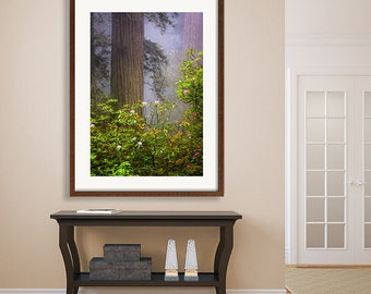 Large Redwood Print, Dreamy Flowers, Misty Redwood Tree Photo, Rustic, Redwood Forest, Pacific Northwest Prints, Rhododendrons, Zen Wall Art