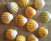 Hawaiian Sunrise Shells, North Shore O'ahu, Pecten Langfordi, Moonrise Shell, Hawaiian Seashell, Bulk Seashells, Seashell craft supplies