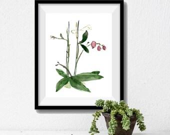 Orchid art print, orchid plant watercolor print, botanical study orchid, plants art, home decor, orchid art, green, pink, zen art