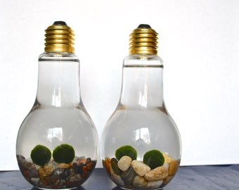 Double Marimo Moss Ball Light Bulb Aquariums - Japanese Nano Moss Balls in Lightbulb Glass Vase Terrariums - Colorado Pebble