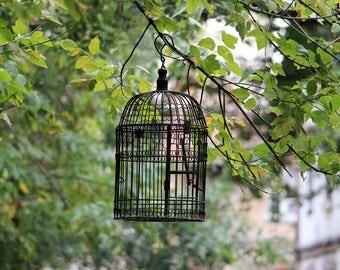 Resultado de imagen de oleo de canario en jaula