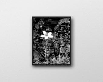 GARDENS NO.3 | Botanical photo print | black and white flower photography | nature decor | modern floral decor | large botanical art print