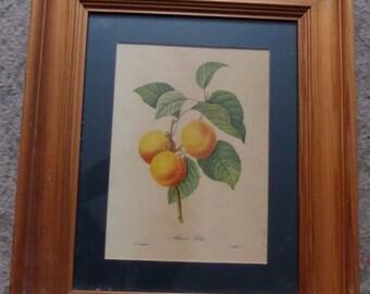 P J Redoute Vintage Print - Botanical - Framed - Apricot Peach French RARE