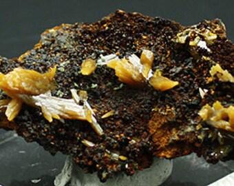 Wulfenite crystals on matrix, Mexico - Mineral Specimen for Sale