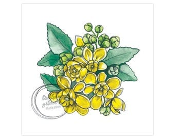 State Flowers: Oregon Grape (Oregon) print