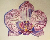 Orchid Original Botanical Watercolor Painting Phalaenopsis 100% Proceeds to Memphis Orchid Society