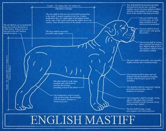 Australian shepherd blueprint elevation australian shepherd english mastiff blueprint elevation english mastiff art english mastiff wall art english mastiff malvernweather Images