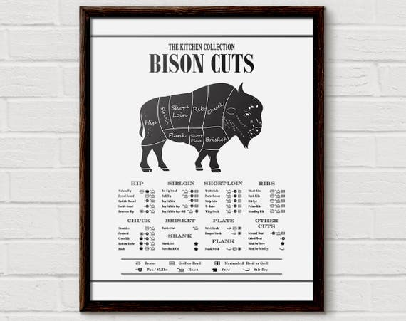 Body Diagram Of Bison