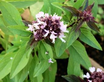 Wild West Organics Thai Basil