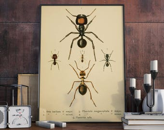 Ant Poster| Vintage Ant Science Print| Insects| Wall Decor Insects Poster| Wasp| Ant Wall Art Print| Vintage Wall Art| Ant Science| HAP020
