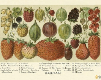 Vintage Strawberry Print - Sweet Berries Poster - Vintage Botanical Illustration - Vintage Strawberry Poster - Museum Quality