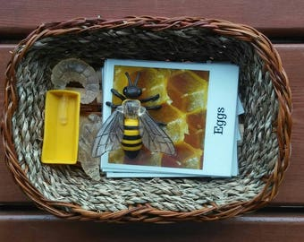 Life Cycle of A Bee, Montessori,  Life Science,