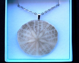 Sand dollar pendant, Natural