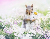 Squirrel Photograph, Squirrel print, Whimsical Animals, Flower Bed, Daisy, Funny Animal Art, Spring Wall Art, Wildlife print, Cute Squirrel