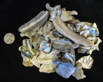 Natural Abalone pieces, (10 0z. ) Organic Seashells, Mosaic, Sailor Valentine, Jewelry, Beach arts & Crafts. Bulk