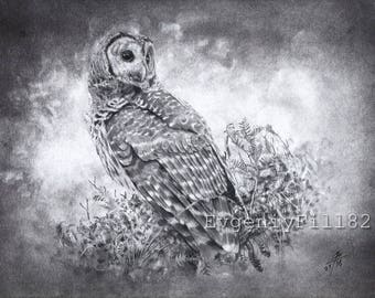 Owl, original drawing by evgeniyfill82, 8 x 12 inch, graphite on paper