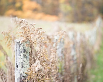 Blue Ridge Parkway - Farm Fence in the Fall 1/2 - Vertical
