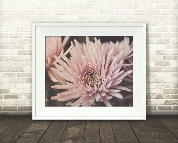 Pink Flower Photograph - Fine Art Print - Wall Art - Floral Decor - Wall Decor - Pictures of Spider Mums - Gifts - Valentines Decor