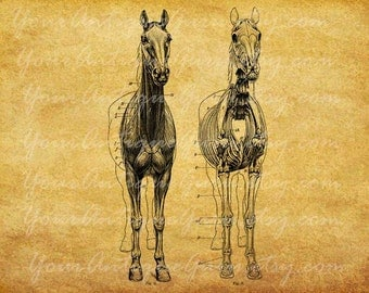 Antique Skeleton Horse Graphics Digital Download Image Iron on Fabric Transfer Clothing Burlap Pillows Tea Towels Tote Bags Animal