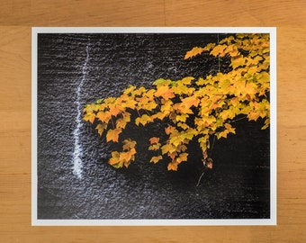 Photo Print of Golden Leaves on Gray Stone Wall from DebSladekPhotography