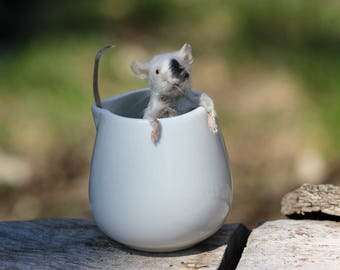 Creamer Taxidermy Mouse