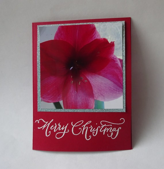 Christmas Card - Handmade Photo Card with a Red Amaryllis Flower - #1105