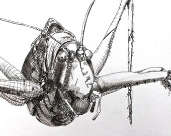 Pen and Ink Katydid on Paper: Original